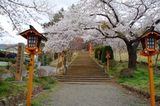 桜 新倉山 入口