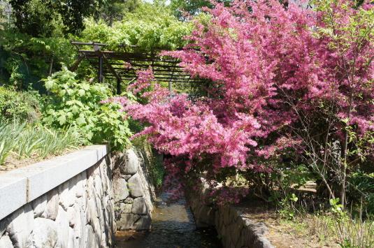 藤切り祭り 花