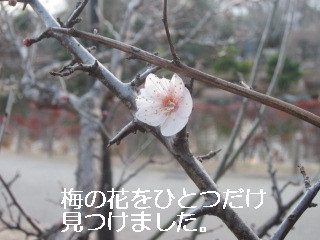 IMG_2570.jpg