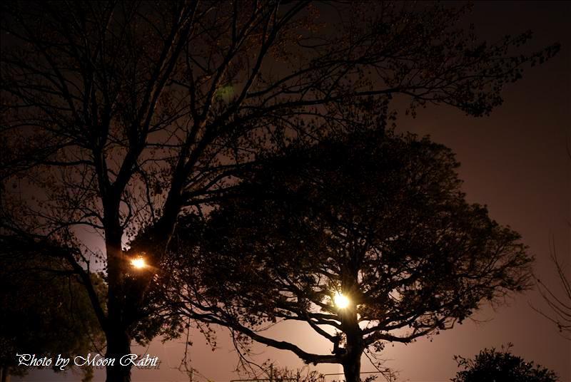 西条市西部公園運動広場の夜景 2007.12.21