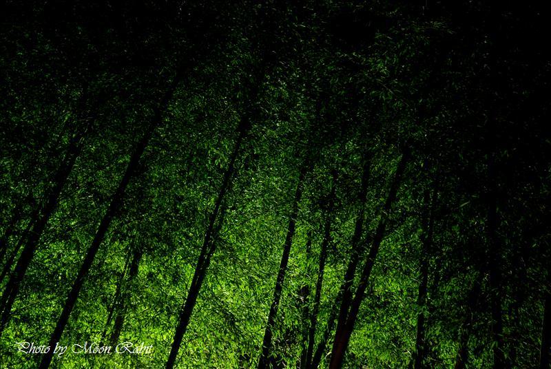 竹林 西条市西田 石鎚神社にて 2007.12.23