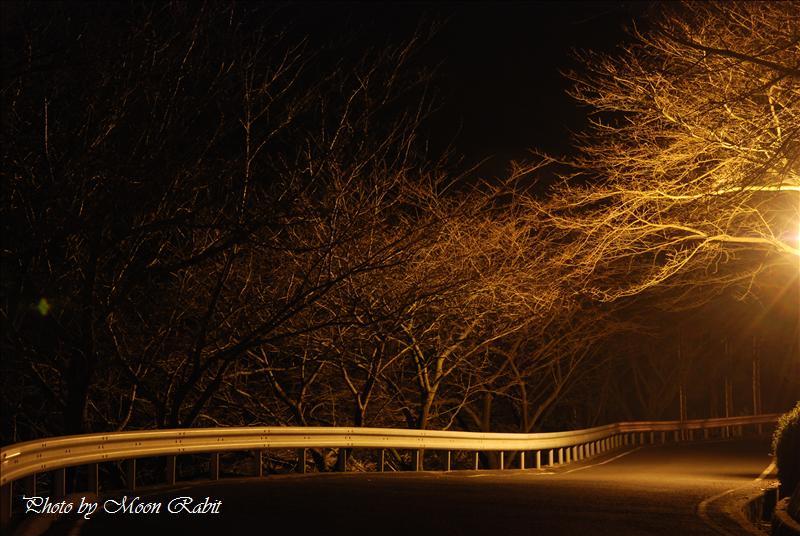 西条市 市民の森の夜景 2007.12.10