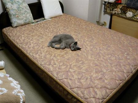 ベッドあかね2