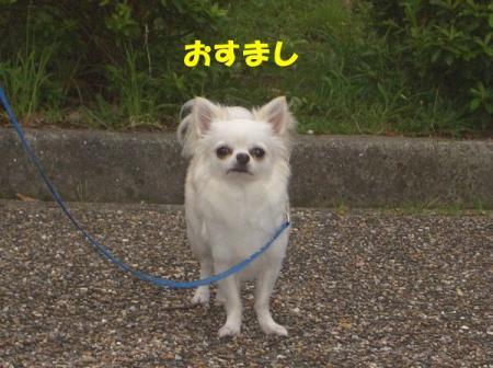 CIMG9339.jpg