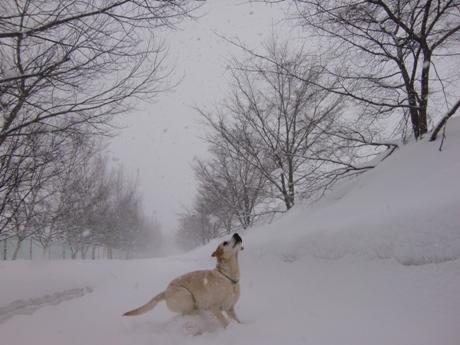 朝から大雪・風雪・雷・なだれ注意報発令!