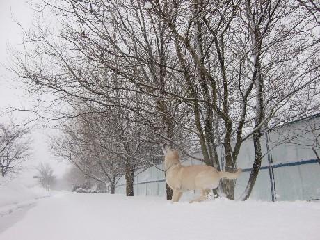 雪♪雪♪雪♪雪♪雪♪雪♪雪♪雪♪雪♪