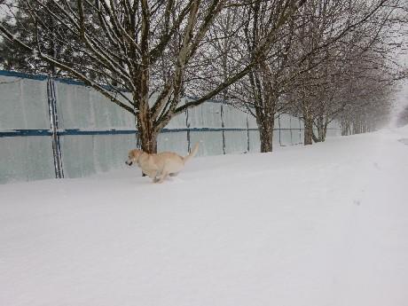 久しぶりの雪に興奮状態?