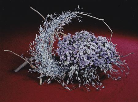 薄紫色のバラ