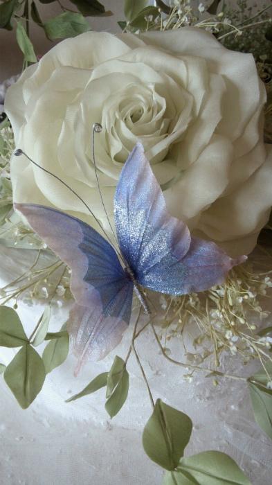 ブログ優しき蝶