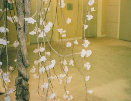 ブログ枝垂れ桜