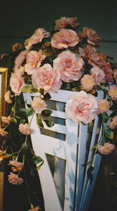 ブログサーモンピンクの薔薇1