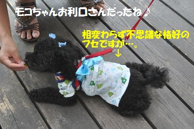 DSC_0064_20110730195406.jpg