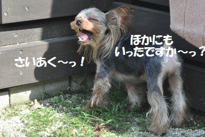 DSC_0259.jpg