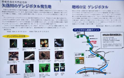 2田処ホタル11.06.05