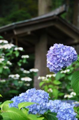 3惣河内神社11.06.15