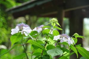 6惣河内神社11.06.15