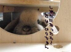 PA150165a.jpg