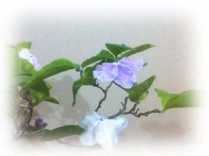 2_4_banmatsuri.jpg