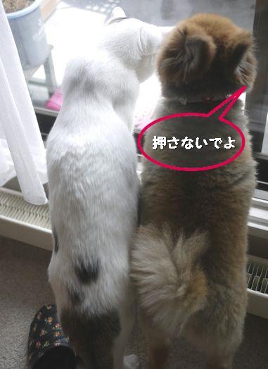 ココ&ゆめ120415
