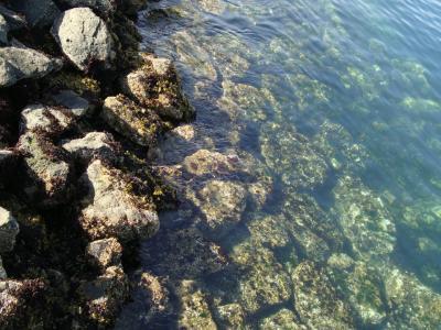 bay water