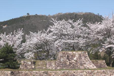 takedajou sakura