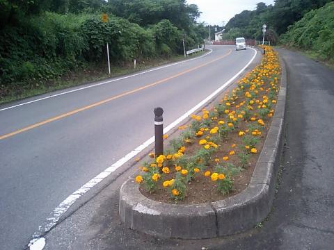 道端の花壇2