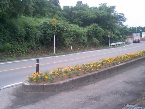 道端の花壇3