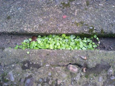 庭の小さな清水の植物1