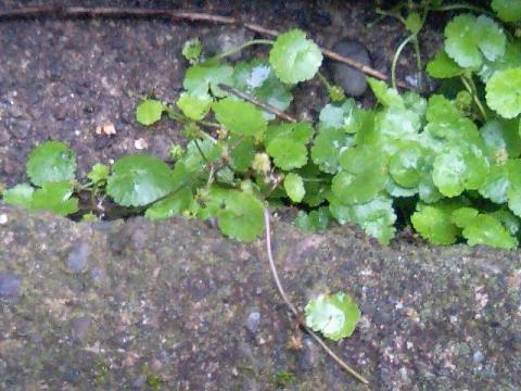 庭の小さな清水の植物2