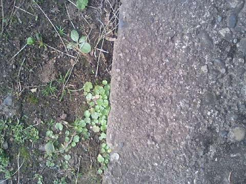 庭の小さな清水の植物8