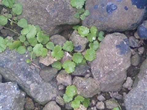 庭の小さな清水の植物9