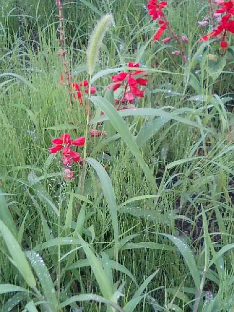 花壇の花&雑草2