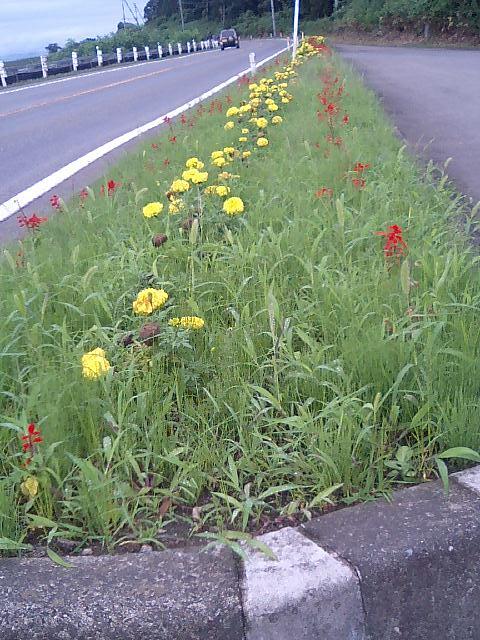 花壇の花&雑草1