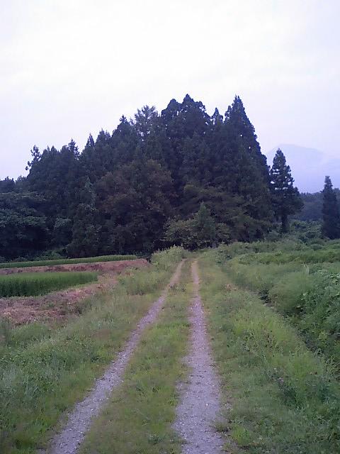 佐良志奈神社8
