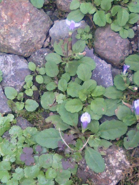 庭の小さな植物1