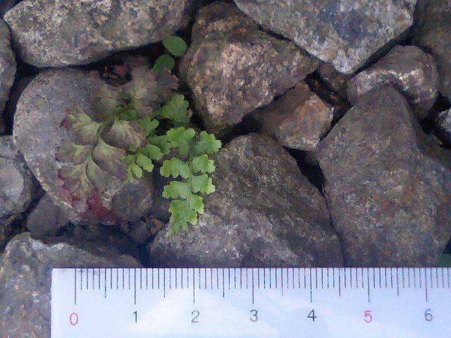 庭の小さな植物5