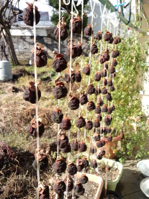 冬のアイコと干し柿