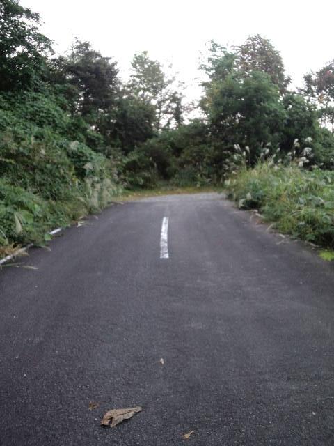 行き止まりの広域林道