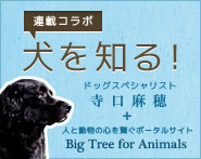連載コラム「犬を知る!」by ドッグスペシャリスト寺口麻穂 & 人と動物の心を繋ぐポータルサイトBig Tree for Animals