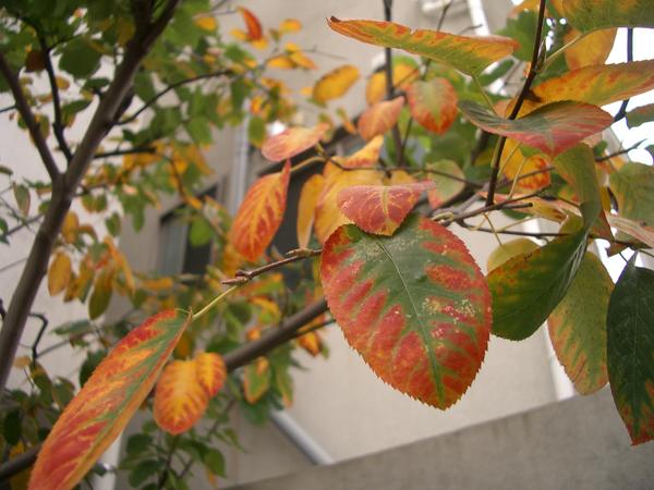 色づく葉っぱ