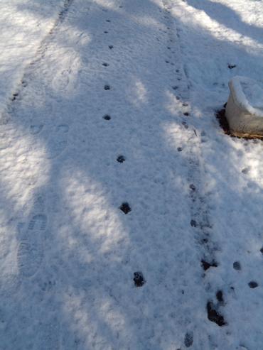 猫の足跡?
