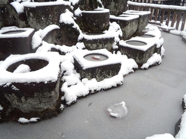 お寺の池も