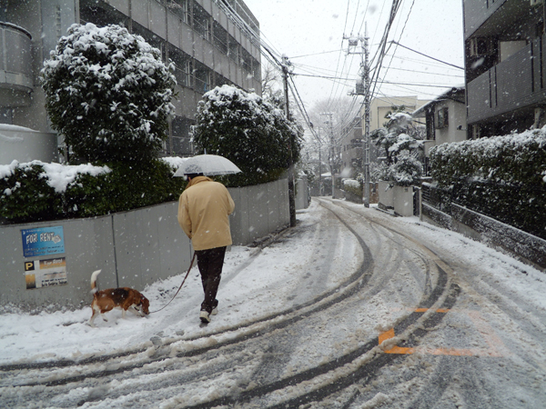 大雪さんぽ