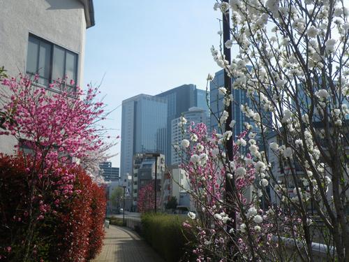 色とりどりの桃の花