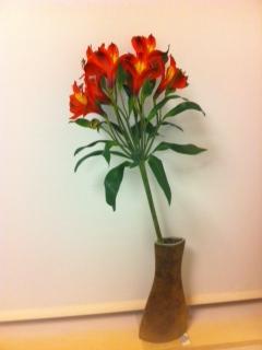 pruvian Lily