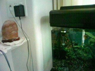 ベタ 水槽 ソルトランプ