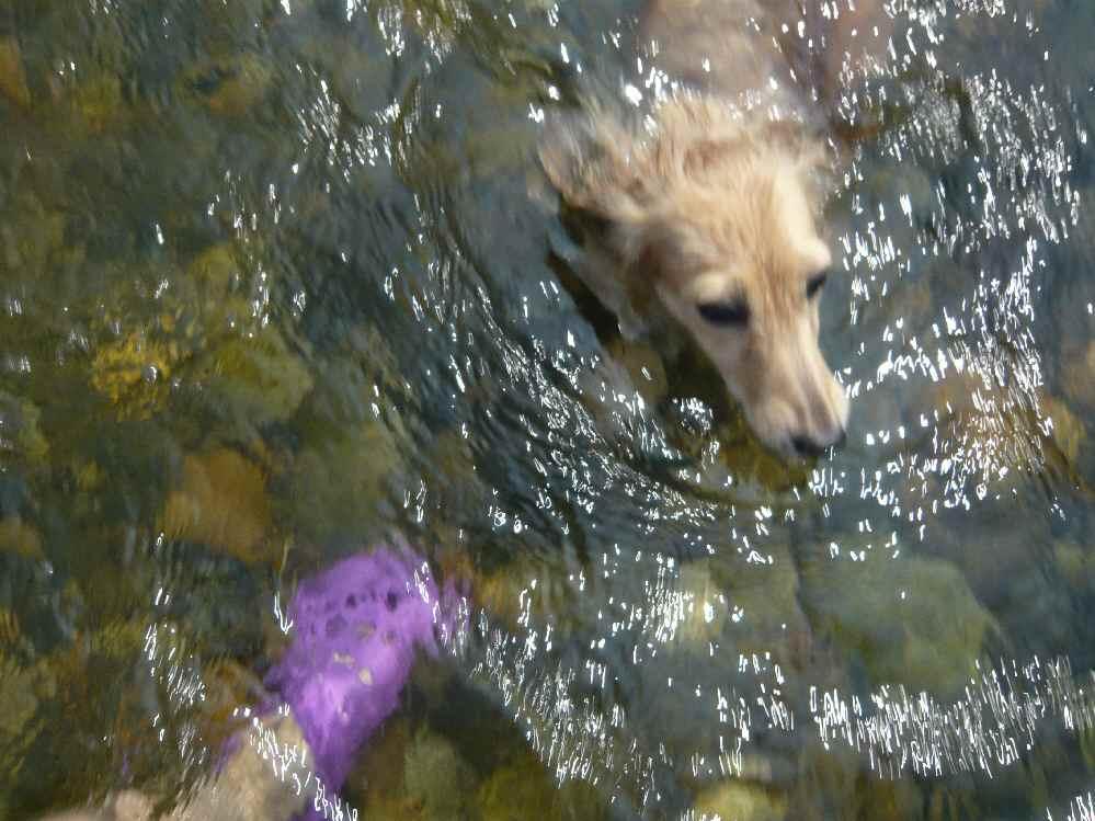 泳ぎました!