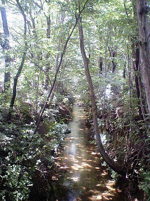 立川市内を流れる玉川上水