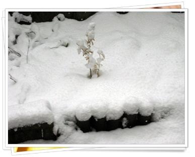 フツーに雪積もってる・・・(´・ω・`*)&なんだか気持ち悪くて出せない土の話。
