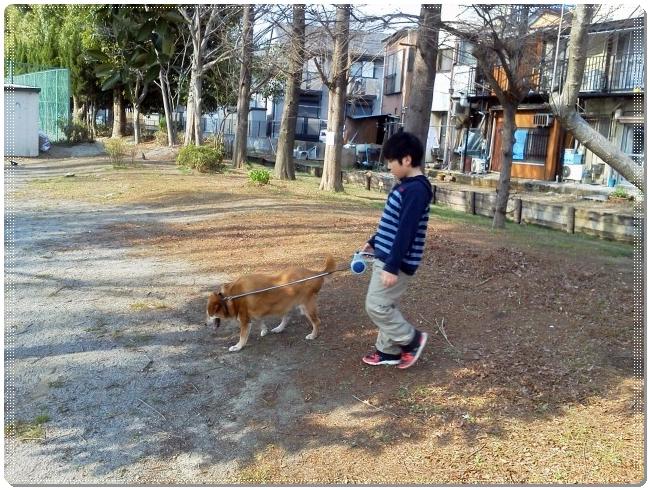 イベリコ犬の散歩